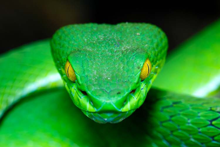 Snakes Images